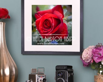 Photographic Art Print of Red Rose with raindrops. Unmounted, unframed flower wall art, poster print, choose your size.