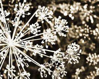 Coffee Brown Fine Art Photograph Vintage Snowflake Abstract Snow Sepia Black White Nature Vintage Style