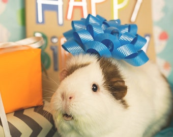 Happy Birthday Guinea Pig Greeting Card
