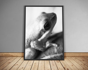 Printed macro photograph // black and white // green tree frog