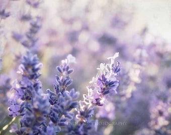 Lavender Flower Photography, purple, floral, nature photography, lavendar, picture, garden decor
