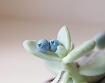 Miniature blueberry earrings, Botanical jewelry, Nature earrings, Blue earrings, Small post earrings, STERLING SILVER, Woodland jewelry