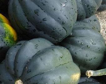 100 Bush Acorn Squash Seeds Table King 82 days