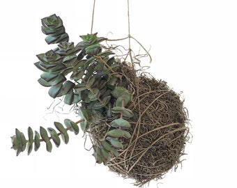 Medium Kokedama