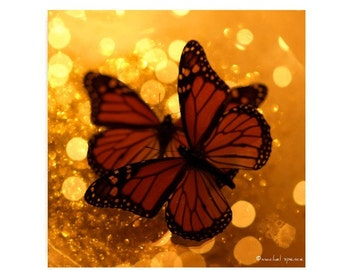 Monarch Butterfly Photograph Butterfly Print Woodland Scene Autumn Fall Orange Earth Tones Insect Entomology Wings