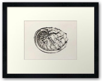 Framed print of my original graphite drawing - Abalone shell