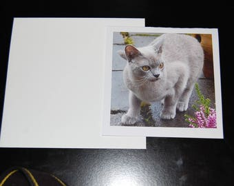 Gray Shorthair Feline Photo Notecard 5x5 with Envelope