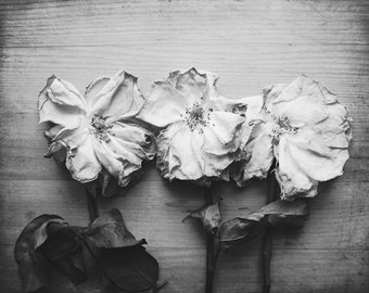 """Rose still life photograph - botanical print -  gray wood rustic farmhouse - country kitchen wall art - garden flowers """"Three Faded Roses"""""""
