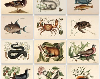 220 animal colour plates from the antique book (1754)  High Resolution Instant digital download