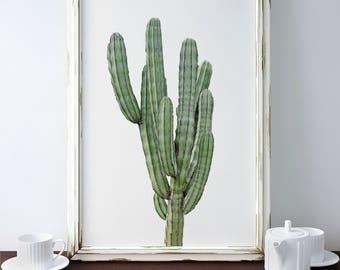 Cactus Print/ Cactus Wall Art/ Cacti Print/ Printable Art/ Succulent Print/ Cactus Poster/ Botanical Wall Art/ Modern Cactus Print
