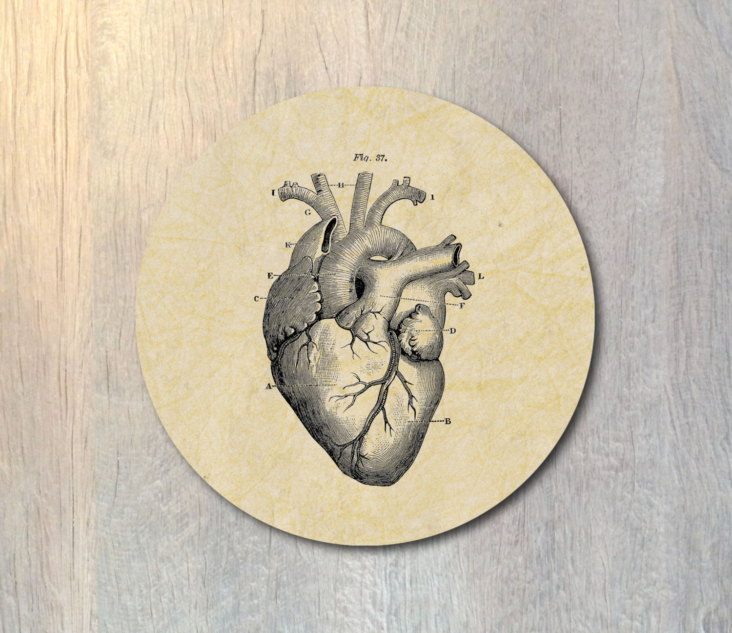 Human Heart Mouse Pad Round Anatomical Heart Human Anatomy