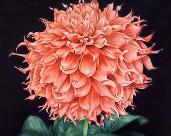 Orange Dahlia Art Print Botanical Print Watercolor Print Botanical Art, Dahlia Wall Decor, Flower Painting Home Decor, Flower Illustration