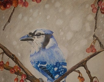 So Blue Jay