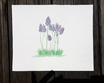 Lavender. 8x10 original watercolor painting