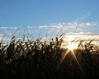Sun Rays Photo, Autumn Sunrise Cornfield View, Nature Photograph, Landscape Photo, Wall Art, Home Decor, Printable, Digital Instant Download