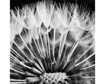 Dandelion photography print, flower print, white flower art, digital photo art, floral flower art, black and white, botanical photographic