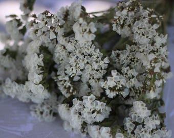 White Statice, White Wedding, Dried White Flower Bunch