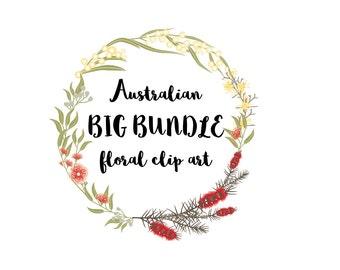 Clip Art Australian flowers callistemon wattle ecalyptus Big bundle, australian flora downloadable flower graphics vector EPS only