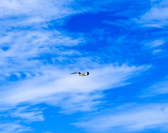 Seagull Soaring the Blue Sky