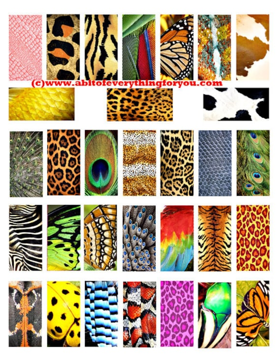 "animals insects patterns textures fur scales feathers clipart  digital download domino collage sheet 1"" x 2"" inch graphics images printables"