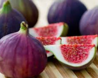"Fig Tree ""Violette de Bordeaux"" Price Includes Four (4) Plants"