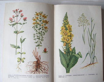 Medical book of Plant Medicinal Plants book Illustrated book with Medical Wildflowers Botanical book with floral drawings 16 color prints