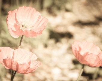 Poppies, Wall Art, Flowers, Poppies, Pink, Orange