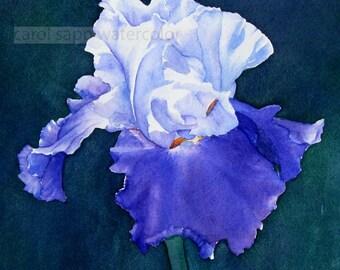 iris watercolor-iris painting-botanical watercolor-botanical art-garden watercolor-fine art print-flower watercolor-flower painting
