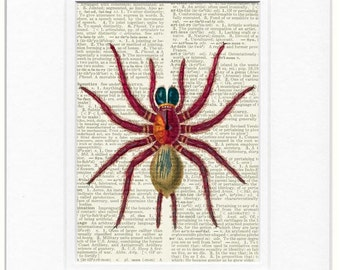 vintage red spider dictionary page print
