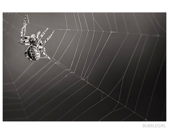 Nature Photography PRINT, Black Spider, Wall Art