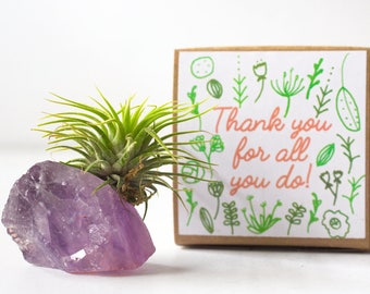 Amethyst Crystal Thank You Gift, Thank You For All You Do, Crystal Air Plant Gift, Mentor Gift, Coworker Gift, Appreciation Gift For Coach