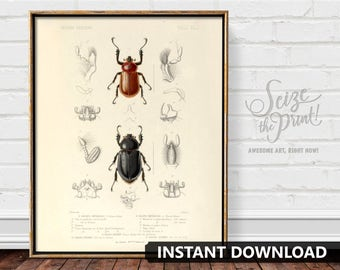 INSECT ART - Insect Print, Nature Decor, Natural History Art, Scientific Illustration, Vintage Beetles Illustration, Instant Download