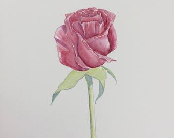 Red Rose Original Watercolor2
