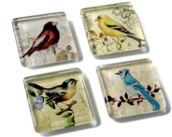 Set of 4, Wild Bird Glass Magnets, Strong Square Glass Magnets, Refrigerator, Fridge Magnets, Bird Magnets, Bird Lover Gift, Bird Watcher