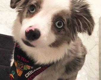 Chicago Blackhawks Dog Bandana
