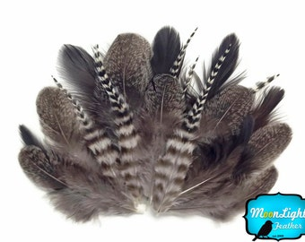 Chicken Feathers, 2 Dozen - MIX NATURAL Brahma Hen Loose Feather : 3267