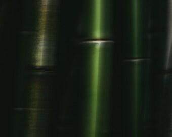 fine art photography - bamboo - abstract photo