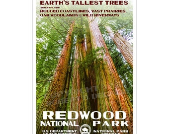 "Redwood National Park Poster, WPA style 13"" x 19"" Signed by the artist. FREE SHIPPING!"