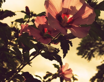 pink flower photo, nature photography, dusty rose, Hawaiian vintage style, summer, tiki, retro, Rockabilly, mauve, taupe, floral, wall art