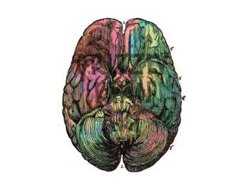 Anatomie des Gehirns in Aquarell