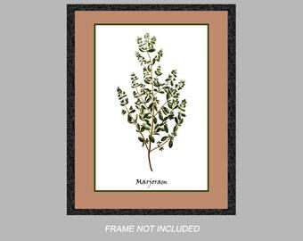 Vintage Botanical Print - Marjoram - Herb Series - 8x10, 11x14, and 16x20 - Digital Matte - Ready to Frame, Kitchen Wall Decor