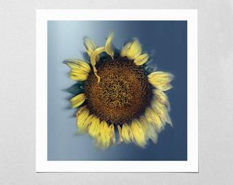 Fine Art Giclée Print - Last Sunflower - Floral - Flower - Photographic Print