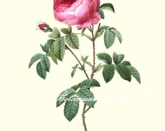 "Roses Print No.3. 11x14"" Vintage roses print. Botanical Prints. Roses Wall Art. Rose Art. 8x10"" 11x14"""