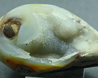 Agatized Gastropod Fossil, India - Mineral Specimen for Sale