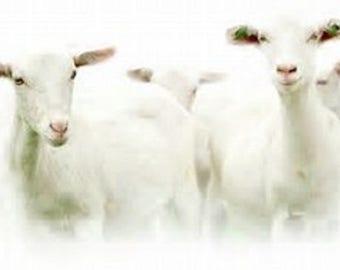 Creamy Goat Milk Body Wash