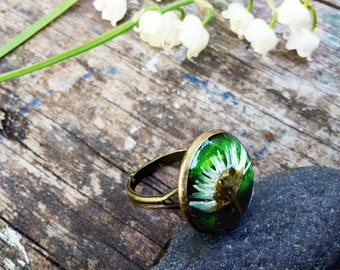 Polyester resin ring with real daisy flower