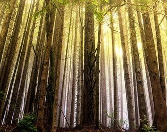 Landscape Photography, Tree Photography, Yellow Haze Forest Trees, Americana Classic Art, Fine Art Photography, Large Wall Art