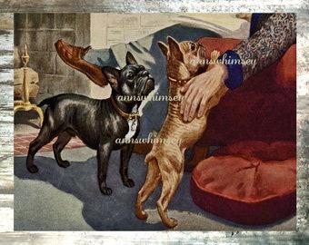 French Bulldog Art Print ~ French Bulldog Lovers, Dog Lovers, Dog Print from 1930s, #77