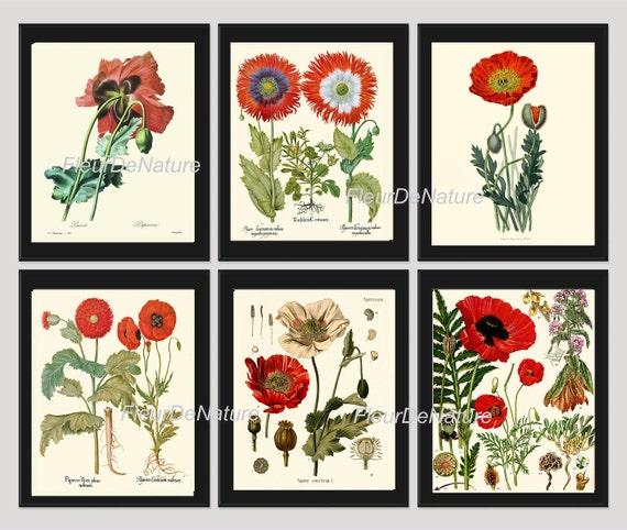 Botanical Print Set Of 6 Art Prints 8x10 Beautiful Red White