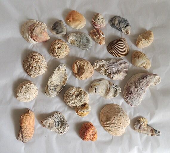 Vintage Decorative Natural Seashells Coral Fossils Shells.. Aquarium Beach Decor (#1)